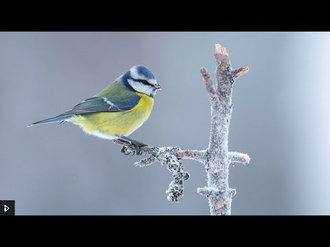 Download WinterWatch 2021(January)Red Button E1: Winter Adventures