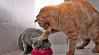 ПРИКОЛЫ! Дружба по кошачьи! Лучшее видео с приколами! Кошки и собаки
