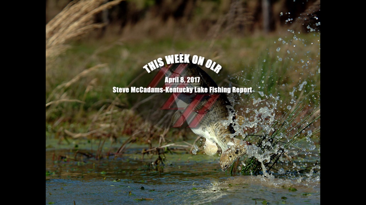 Olr april 8 2017 steve mccadams kentucky lake fishing for Kentucky lake fishing reports