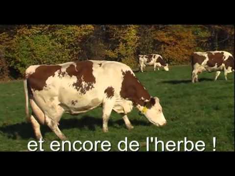 Patrick leveur de vaches laiti res et de brebis by for Chambre agriculture champagne ardenne