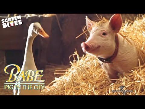Babe Pig In The City  - Official Trailer (HD) Magda Szubanski, Elizabeth Daily, Mickey Rooney
