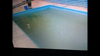 piscina com água verde  veja como resolver o problema