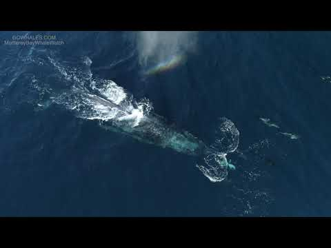 Rare whale sightings surprise sightseers in Monterey Bay
