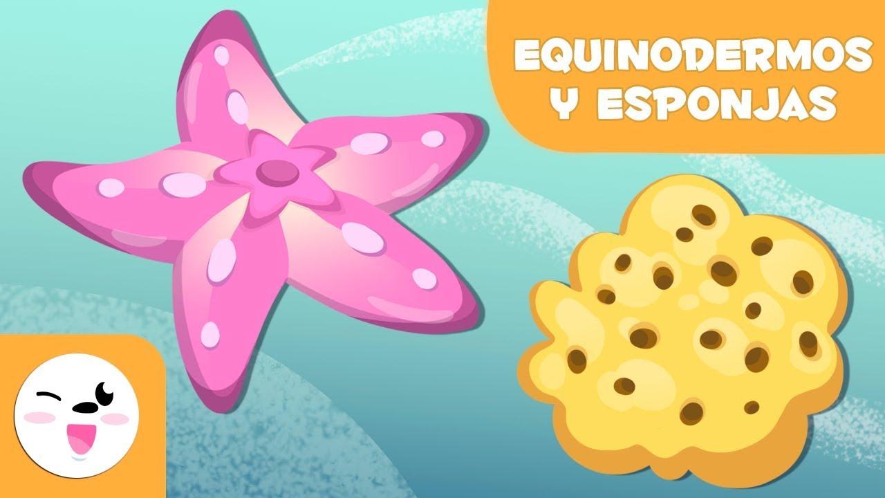 Los Equinodermos Y Las Esponjas Para Niños Animales Invertebrados Ciencias Naturales Para Niños