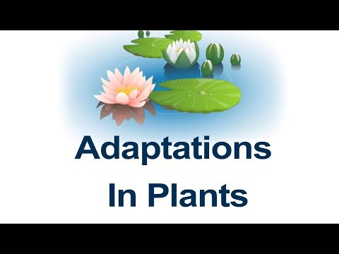 Class 4 Science | Learn Habitats And Adaptation - Plant Adaptations And Examples | Pearson