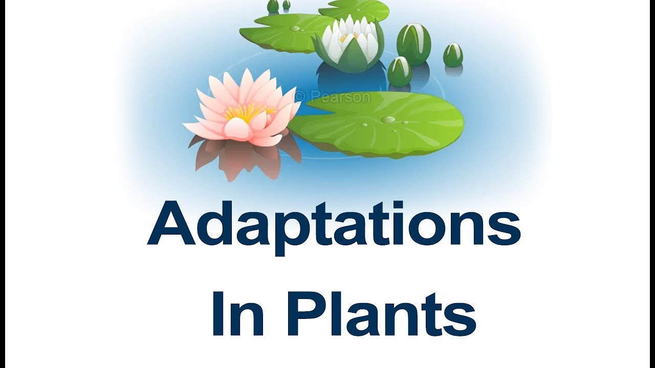 hight resolution of Class 4 Science   Learn Habitats and Adaptation - Plant Adaptations and  Examples   Pearson - YouTube