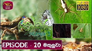 Sobadhara - Sri Lanka Wildlife Documentary | 2019-08-02 | Spider (මකුලුවා) Thumbnail