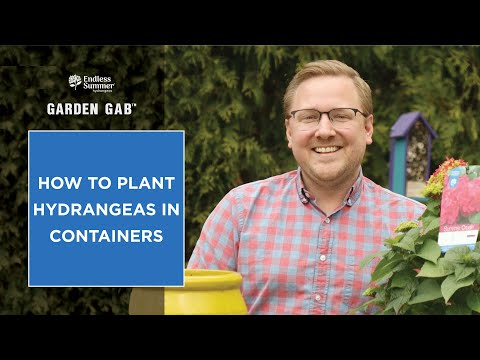 Download How to Plant Hydrangeas in Containers