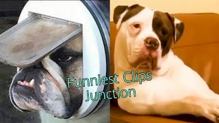 Funniest Animals🐧-Best Of the 2020 - Funny Animals video😁-Cutest Animals Ever