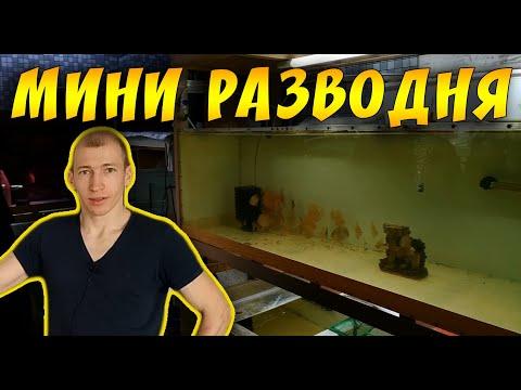 ОБЗОР МАЛЕНЬКОЙ РАЗВОДНИ СЕРЕГИ ХАРЬКОВ!
