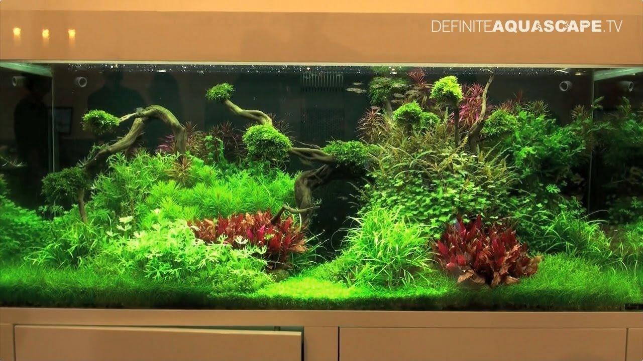Aquarium Ideas From Interzoo 2014 Pt 3 Tropica