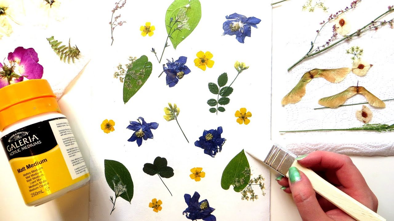 How To Make Pressed Flower Art Pressing Flowers In A Book Youtube