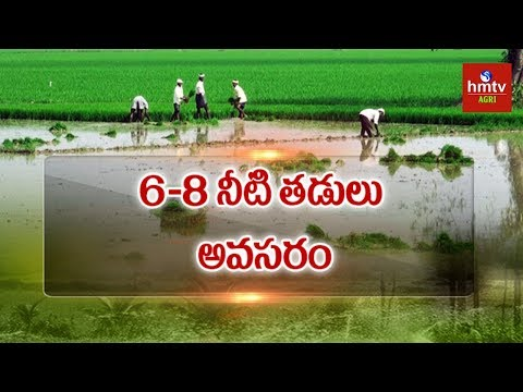 Irrigation Water Management Tips to Get High Yield | hmtv Agri