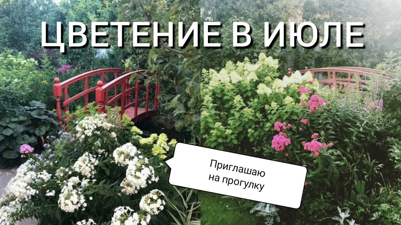 Цветение в июле - приглашаю на прогулку в мой любимый сад.