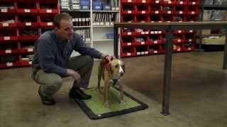 How To Adjust The Web Master Harness:  A Ruffwear Quick Start Video