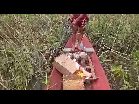 Cobras pegas nos campos de São João Batista-MA