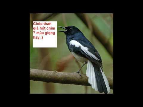 Choe than hot nhieu giong rung hay nhat 2016