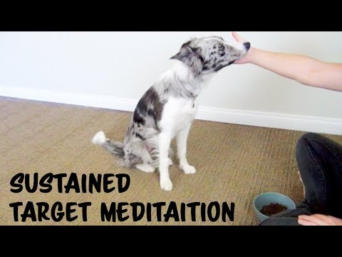 Sustained targeting meditation - Dog Training by Kikopup