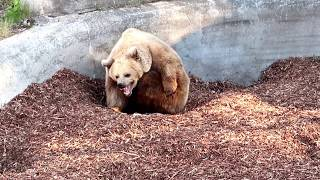 Зоопарк в Финляндии! Helsinki Korkeasaari Zoo!!