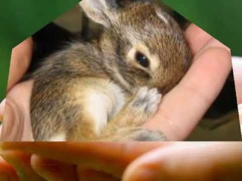 The Cutest Baby Animals Ever Youtube