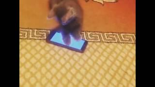 Котенок развивается