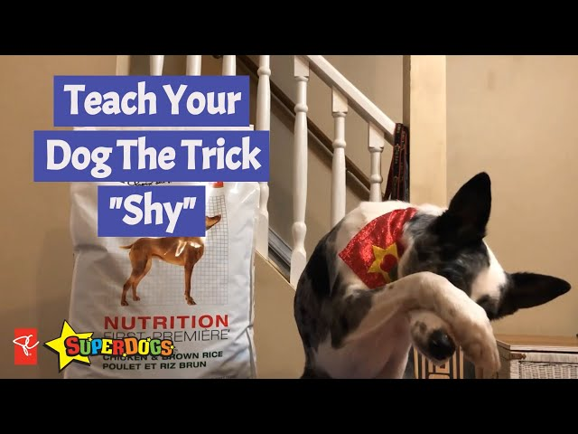 SuperDogs | Teach Your Dog The Trick - Shy | Dog Training