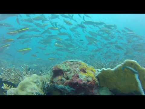2013 06 Lankayan underwater AVCHD full length
