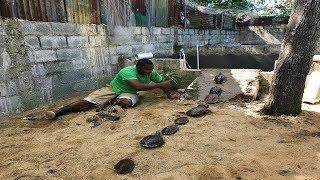 cmo-elaborar-un-estanque-para-tortugas