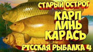 русская рыбалка 4 Карп Линь Карась озеро Старый Острог рр4 фарм Алексей Майоров russian fishing 4