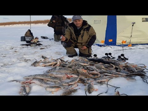 Первый лед 2019-2020.Леска трещит в пальцах. Плюс строганина от Дмитрича