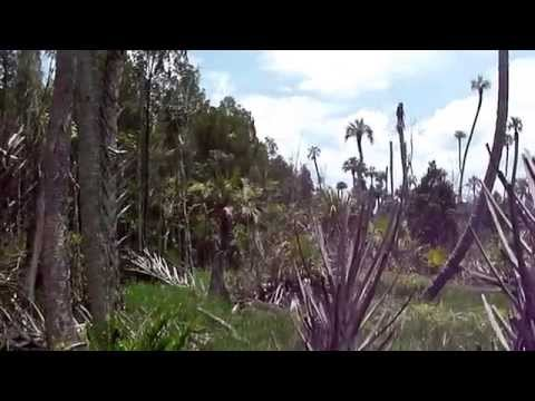 Crystal River Preserve Hike