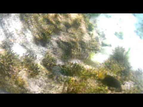 Snorkeling Marine Life in Sta. Cruz