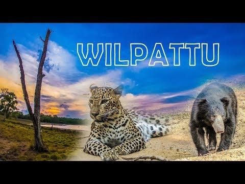 Wild Wilpattu, Sri Lanka #srilanka #travel
