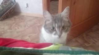 Часть 2  Маруся зовет посмотреть котят