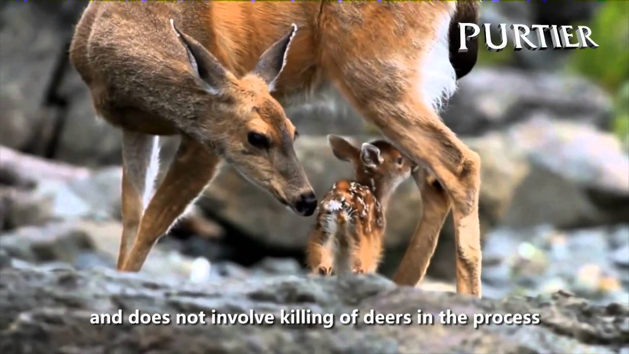 Purtier Deer Placenta - Stem Cell Therapy