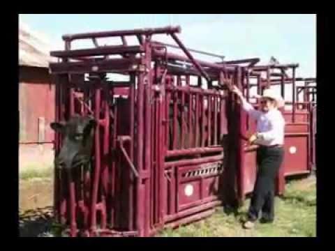 Stampede Steel Promo Video