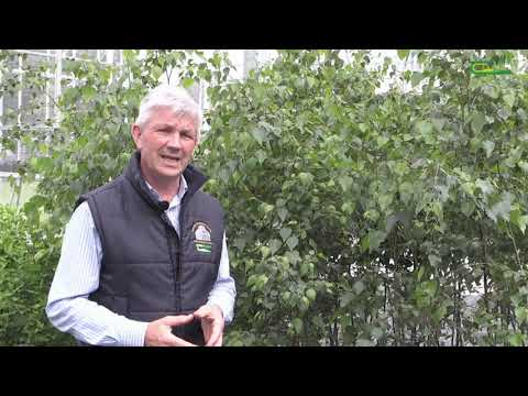 Propagation and Trees Enterprise  -