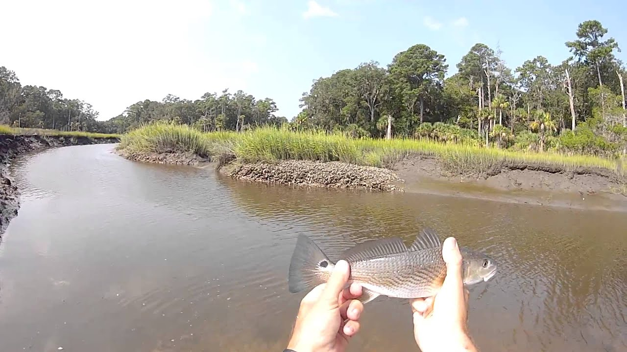 Plenty of redfish in savannah ga youtube for Georgia out of state fishing license