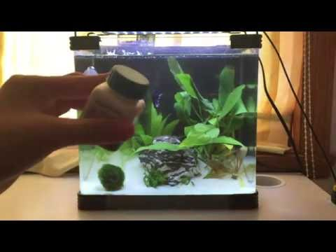 My Top 5 Favorite Betta Fish Products
