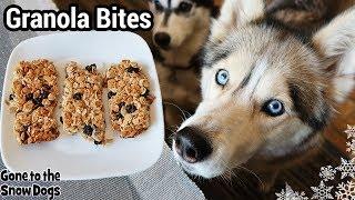 How to Make Granola Bars for Dogs   DIY Dog Treats 123