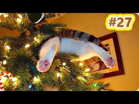 Смешные видео про кошек, смотреть прикольные видео с