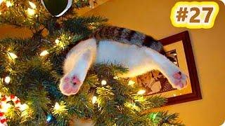 Смешное Видео С Кошками 2017 Самое Лучшее Кошачьи Приколы 27