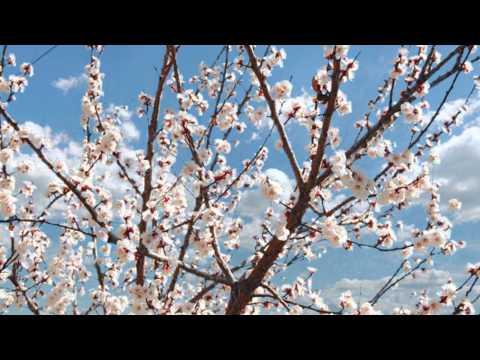 Lühifilm noortevahetusest Forest Tales: Apricot stone
