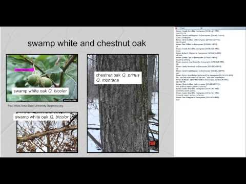 Identification and Ecology of Common Northeastern Hardwood Trees