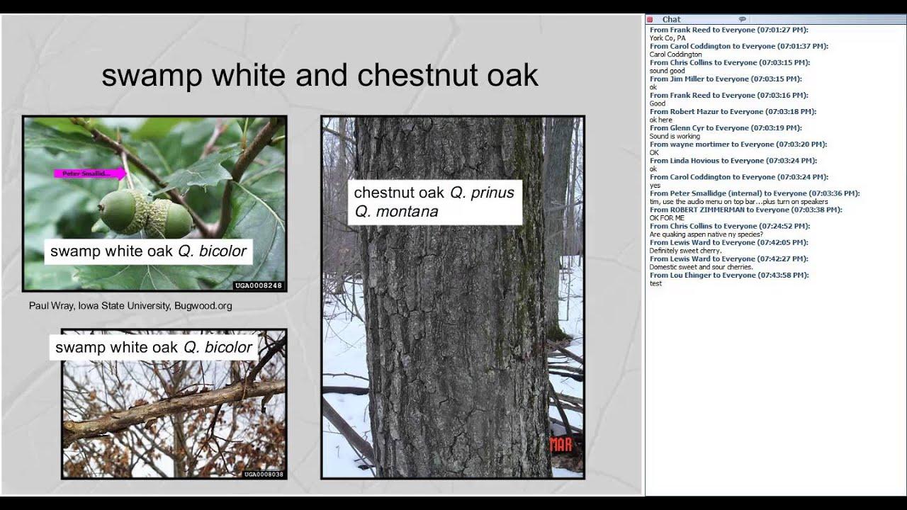 Identification And Ecology Of Common Northeastern Hardwood