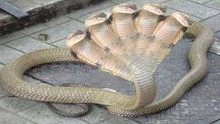 most amazing giant anaconda attacks elephant vs rhino lion vs crocodile rhino gabel