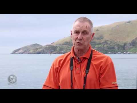 The Amazing Wildlife of Otago Peninsula