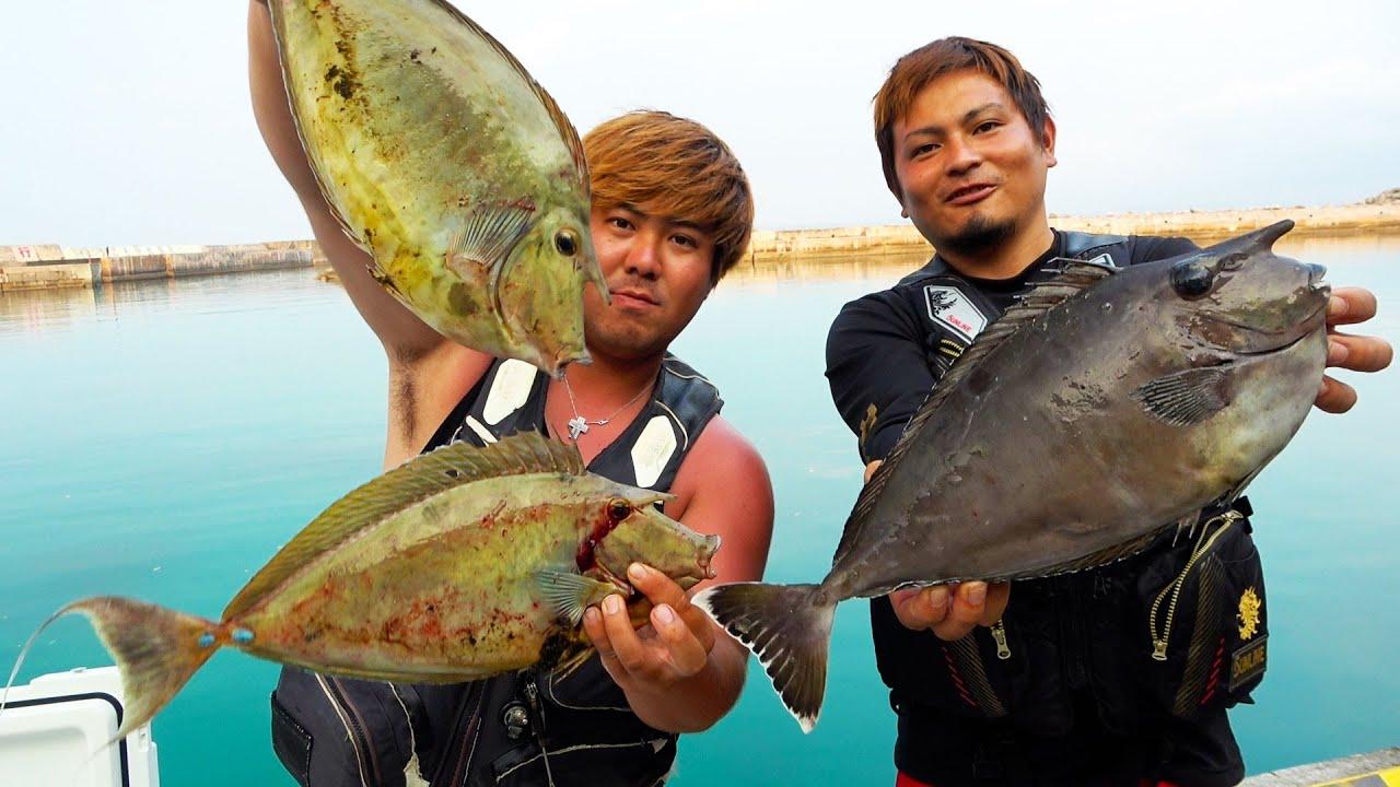 大量の血合いで餌付けされた角魚を釣り上げろ