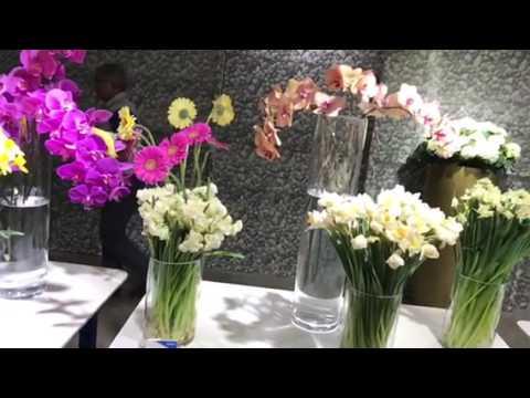 Al Lokrit flower Exhibition - Holland -26/01/2017 - 31/01/2017