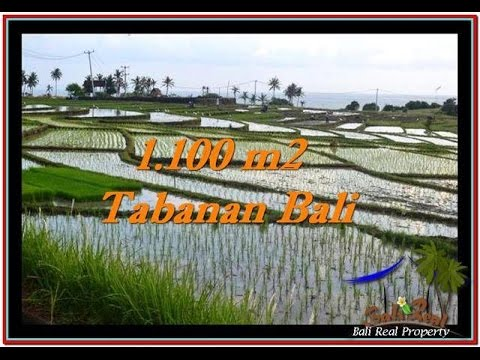 Ocean and Ricelields View Land for sale in Tabanan Bali TJTB248